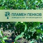 ЗП Пламен Пенков - Вижте още