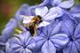 Пчеларски магазин Павликени - Вижте още