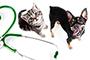 Ветеринарна клиника Аксис - Вижте още