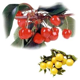 Гейбриъл - Николай Колев Разсадник за овощни дървета, декоративна растителност и рози
