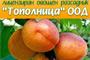 Овощен Разсадник Тополница  - Вижте още
