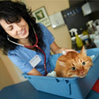 Central Veterinary Clinic - View more
